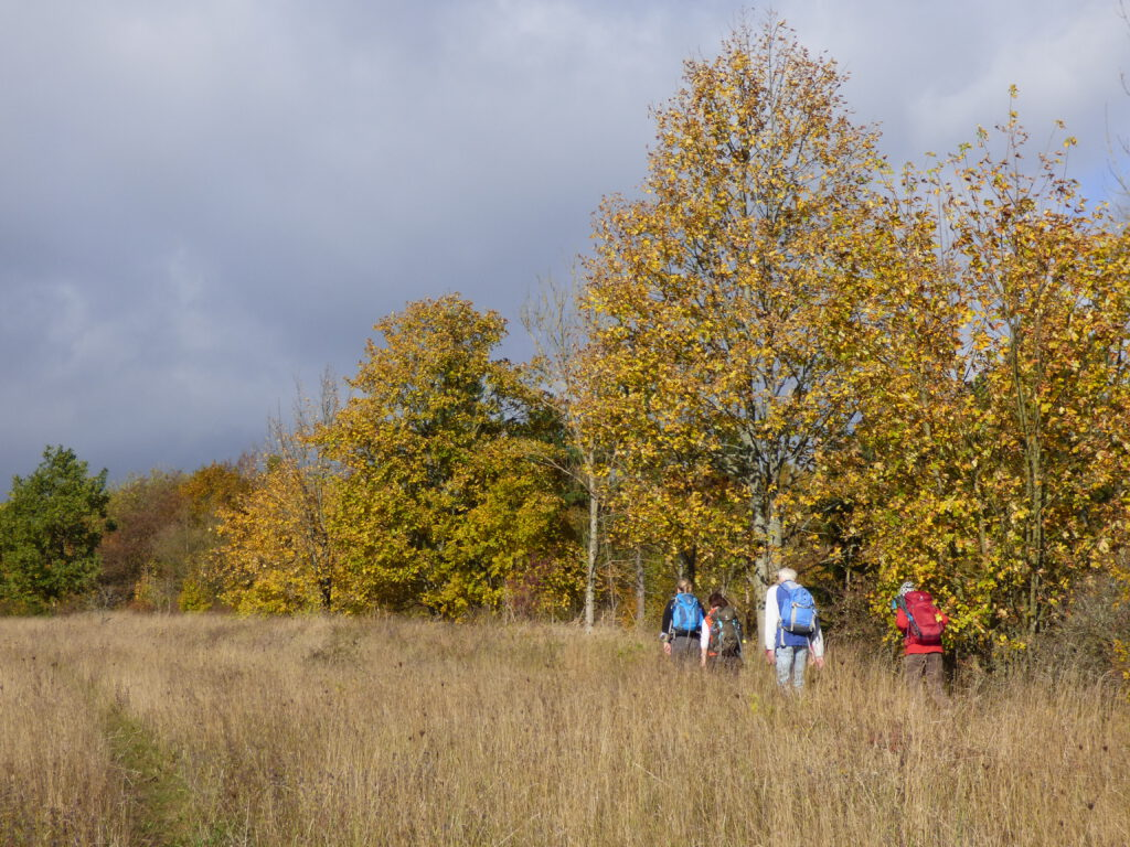 Wandern im Herbst im Meißner